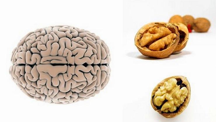 Noci cervello umano energia meno stanchezza